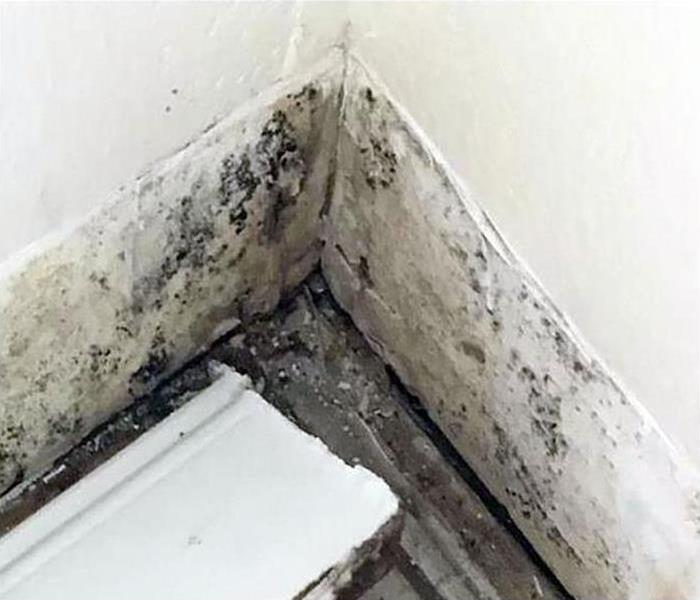 mold infestation