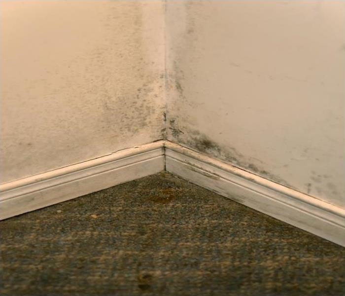 Mold Remediation Our Mold Remediation Specialists Explain Our Containment Strategies For Your Burley Home